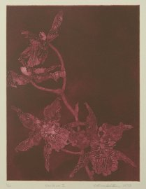 This collagraph print from 2012 is the first in the orchid series. This oncidium orchid was the first of many to die for my printmaking.